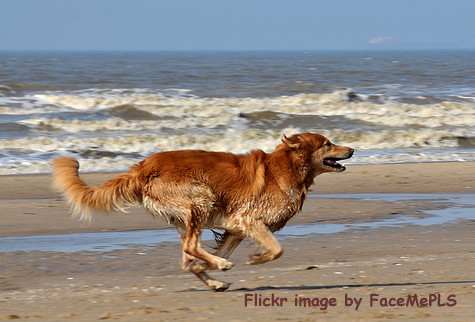 Pilgrim Bark Park and the seashore of Provincetown, MA provide a perfect venue for Fido to romp in the surf and sand
