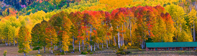 Fall in Aspen, Colorado is evident by the stark white bark of the Birch Trees and their brilliant yellow leaves sprinkled with radiant reds.  Flickr photo by snowpeak