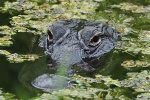 Everglades National Park, photo by traveledfoot.com