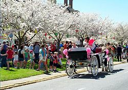 Macon, GA Cherry Blossom Festival