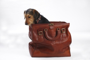 dog-in-the-bag-1362561